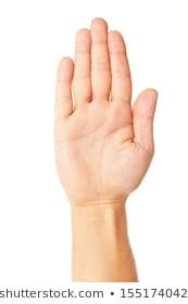 Dłoń: obrazy, zdjęcia stockowe i ilustracje wektorowe | Shutterstock